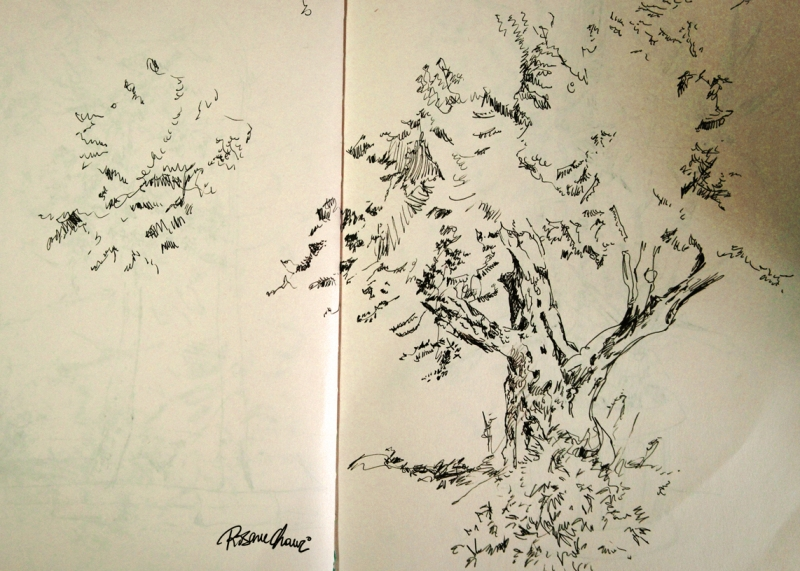 rosane chawi vegetation sketch